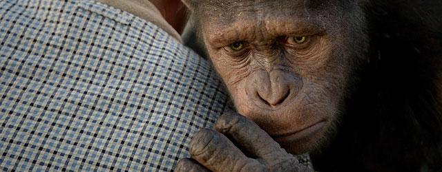 מעמד הקופים הבינוני סוף סוף עומד על שלו. כאן תתחיל המהפכה! העם דורש אקשן אינטליגנטי!