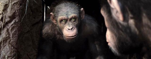 """התקדמות ראשונה לקראת המשכים ל""""כוכב הקופים: המרד"""" ו""""אקס-מן: ההתחלה"""". לא כל החדשות טובות"""