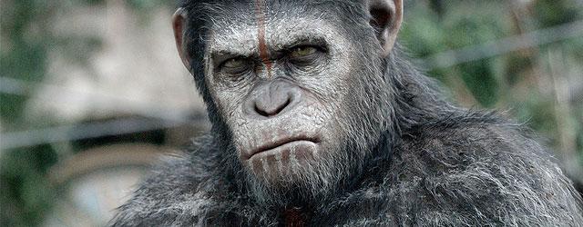 """בסך הכל רצינו קצת אסקפיזם בקולנוע, אבל """"כוכב הקופים"""" החדש התברר כסרט חכם ואקטואלי כל כך שזה מדכא"""