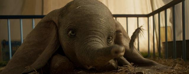 פילים, מעופפים, נכשלים בקופות בקטנה, היפיטי הופטי.