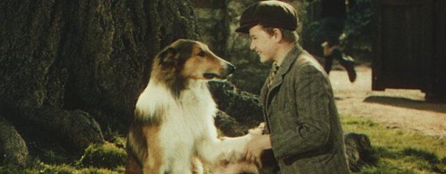 הרבה לפני שטימי נפל לבאר, היה סיפור על ילד, כלבה, געגוע ונאמנות.